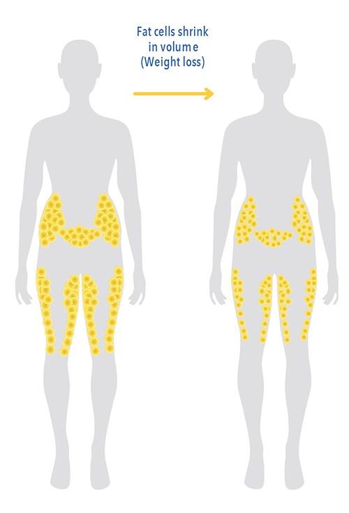 Grasa corporal versus peso corporal